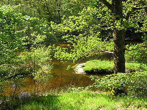 Limousin - Small river in Creuse, Limousin