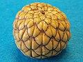 Rumbia-fruit-763034.jpg