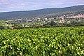Saint-Saturnin-lès-Apt et son vignoble en période estivale.jpg