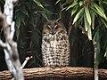 Saint Louis Zoo 038.jpg