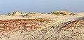 Sal Cape Verde C phelypaea - C alexandrinus.jpg