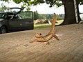 Salamander on a wooden board.jpg