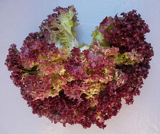 Salat Lollo Rosso fcm