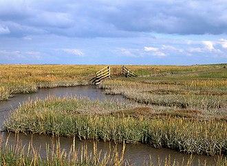 Eiderstedt - View of a salt marsh