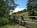 Sandia mountains meadow.jpg