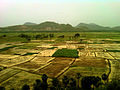 Scenic view of paddy fields at Sankaram, Visakhapatnam district.jpg