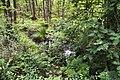 Schleswig-Holstein, Krempermoor, Landschaftsschutzgebiet Geesthang bei Dägeling mit Bockwischer Moor NIK 5978.jpg