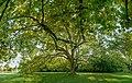 Schlosspark Laxenburg 8822 Mercator 16.jpg