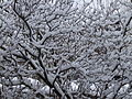 Schnee auf Baeumen im Park.jpg