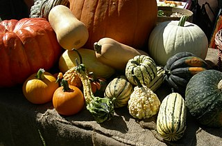 Image of various types of squash, a food high in magnesium