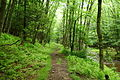 Seneca-hiking-trail - West Virginia - ForestWander.jpg