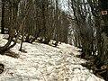 Sentier enneigé.jpg
