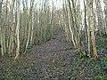 Shawhill Plantation - geograph.org.uk - 87985.jpg