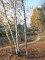 Shebekinsky District, Belgorod Oblast, Russia - panoramio (9).jpg