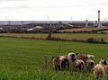 Sheep farm, wind farm and factory - geograph.org.uk - 45648.jpg