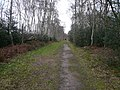 Sherwood Forest - Bridleway - geograph.org.uk - 722092.jpg