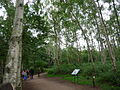 Sherwood Forest 02.jpg
