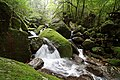 Shiratani Unsuikyo, Yakushima island, Japan (4196051271).jpg