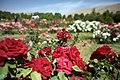 Shiraz Botanical Garden 2.jpg