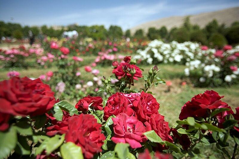 پرونده:Shiraz Botanical Garden 2.jpg