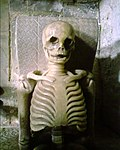 Shirley Skeleton Breedon.jpg