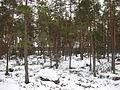 Sikavuori Jalasjärvi 2.jpg