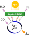 Simple photosynthesis overview - Ar.png