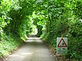 Slippery road beneath arching trees - geograph.org.uk - 890313.jpg