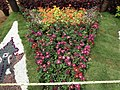 Snap from Lalbagh Flower Show Aug 2013 8354.JPG