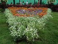 Snap from Lalbagh Flower Show Aug 2013 8372.JPG
