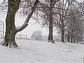 Snowy Sentinels (100896121).jpeg