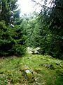 Soonwald - Nähe Hochsteinchen - panoramio.jpg
