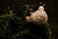 Sparkly mushroom (6020598055).jpg