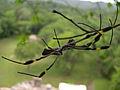 Spider Chiapas Mexico.jpg