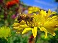 Spring in Iran-Qom City (26).jpg