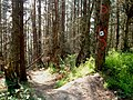 Stainburn Forest - geograph.org.uk - 460065.jpg