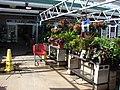 Starr-080103-1451-Impatiens hawkeri-plants for sale-Lowes Garden Center Kahului-Maui (24272961163).jpg