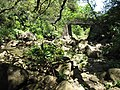 Starr-110330-4268-Hedychium coronarium-habitat and stream-Keanae-Maui (24713823009).jpg