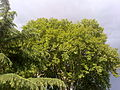 Stormy Weather Abbottabad.jpg