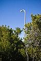 Street Light (2766269207).jpg