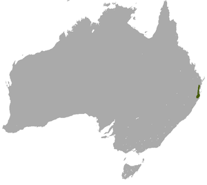 Subtropical Antechinus area.png