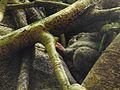 Sulawesi trsr DSCN0262.JPG