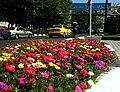 Summer times Flowers - panoramio.jpg