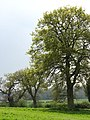 Sunshine and showers - geograph.org.uk - 786034.jpg