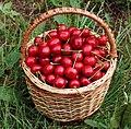 Sweet cherries in basket 2018 G2.jpg