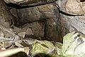 Szádok-barlang2.jpg