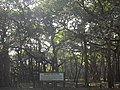 THE GREAT BANYAN TREE, BOTANICAL GARDEN, SHIBPUR, WEST BENGAL.jpg
