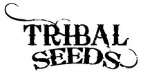 Tribal seeds soundwaves