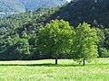 Taceno 08-2008 - panoramio - adirricor (1).jpg