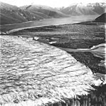 Taku Glacier, tidewater glacier terminus and eskers forming on the lower right side, September 1, 1977 (GLACIERS 6257).jpg